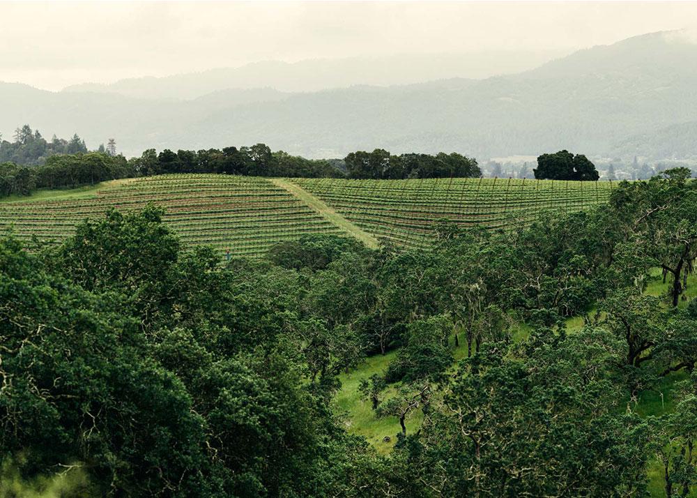 Joseph Phelps Vineyards - Napa Valley
